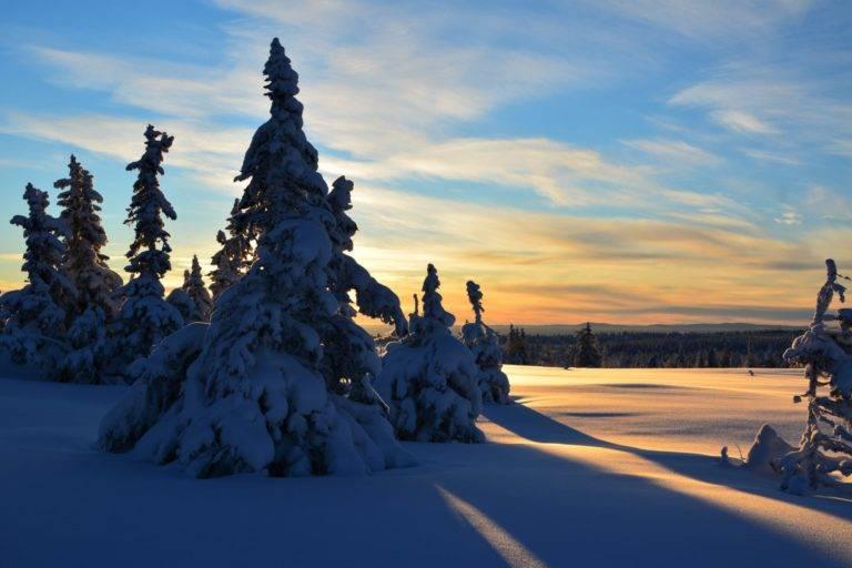 Snødekte trær på Sjusjøen